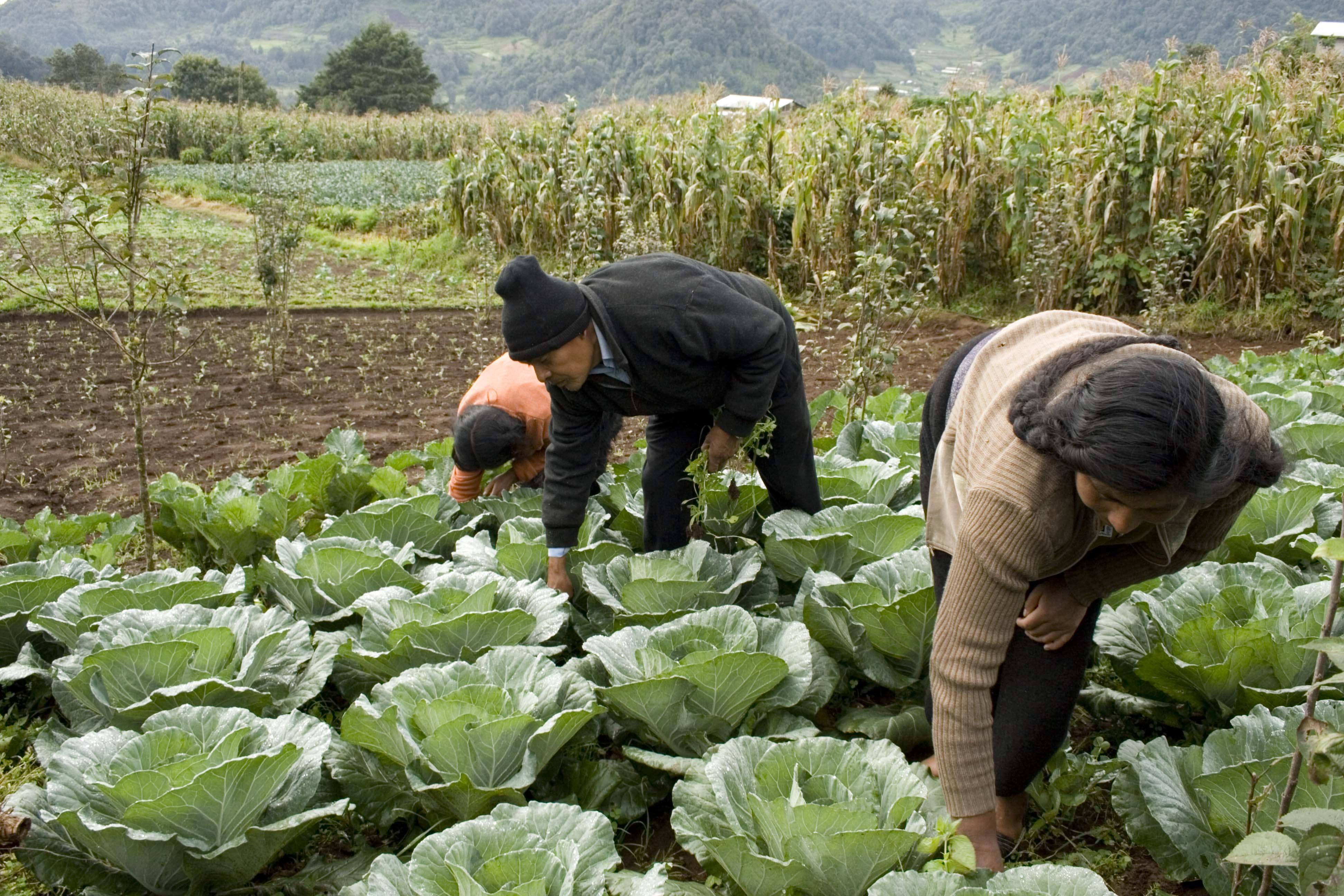 Suben los precios de casi todos los alimentos básicos, advierte la FAO