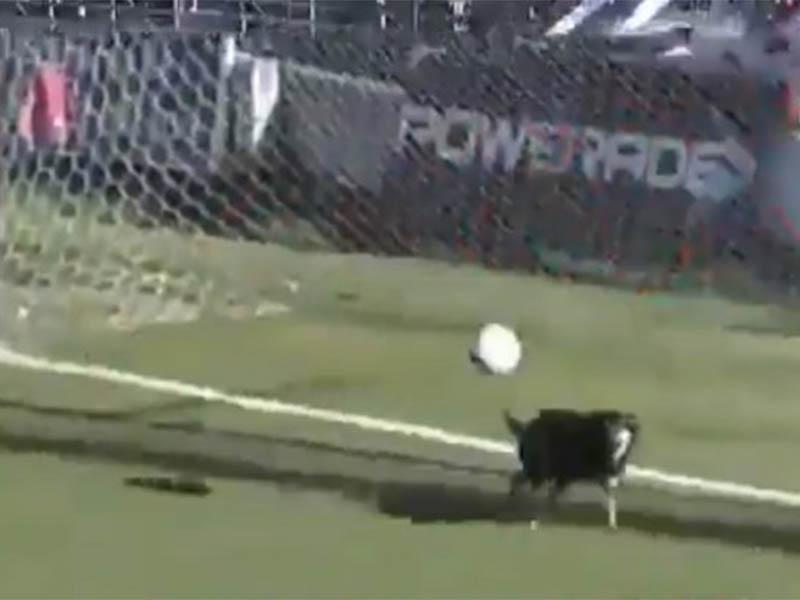 Insólito: un perro evitó un gol en el Torneo Federal A