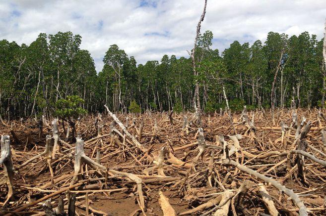 Francia rechaza el acuerdo UE-Mercosur y lo condiciona al medio ambiente